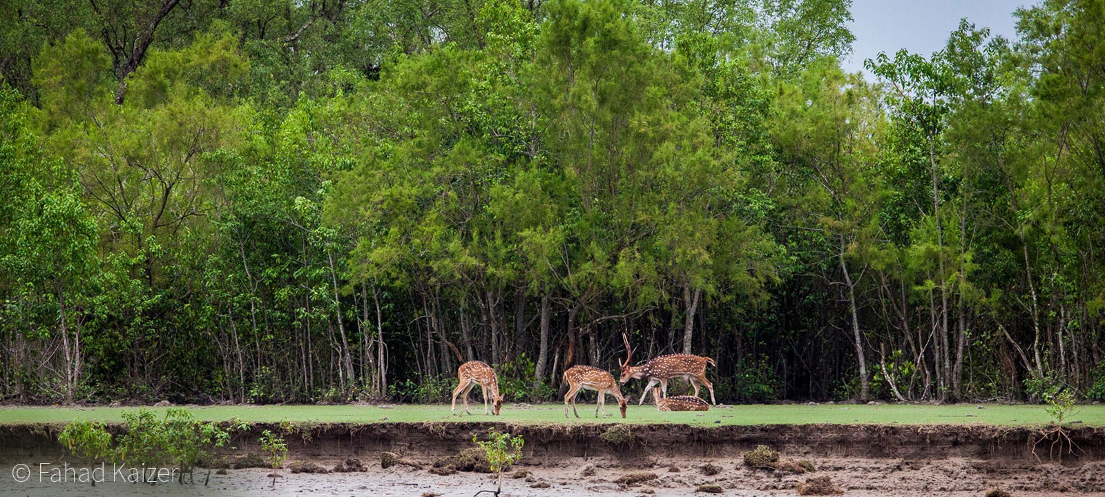 Sundarban - the natural nerve of Bangladesh